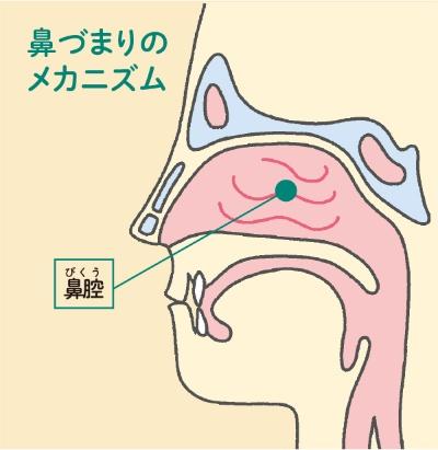 鼻づまりのメカニズム<br>鼻の鼻腔粘膜が腫れると「鼻づまり」になる