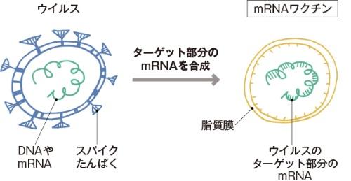 ■ウイルスの遺伝情報だけで作る「mRNAワクチン」