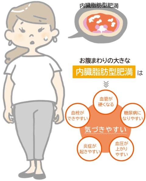 糖・脂質代謝の低下を伴う可能性のある内臓脂肪量は、腹部断面積で100cm²。男性は腹囲85cm以上、皮下脂肪の多い女性は90cm以上が目安。正常体重なのに内臓脂肪が多いという人もいる。
