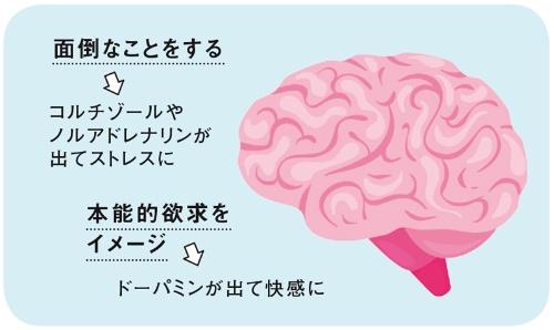 面倒なことをする→コルチゾールやノルアドレナリンが出てストレスに、本能的欲求をイメージ→ドーパミンが出て快感に