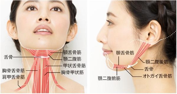 舌の付け根にある舌骨に付く舌骨筋群の筋力が衰えると、舌骨を正しい位置に保てなくなり、下がる。するとあごまわりの筋肉や皮膚が一緒に下がり、たるみを引き起こす。