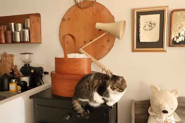 オーバルボックス(茶色い木箱)の上段には毎日使うマスクを、下段にはお茶わんを入れている。角があると隙間ができるため、お茶わんなどの丸いものは丸い形状の入れ物に収納するのがポイント