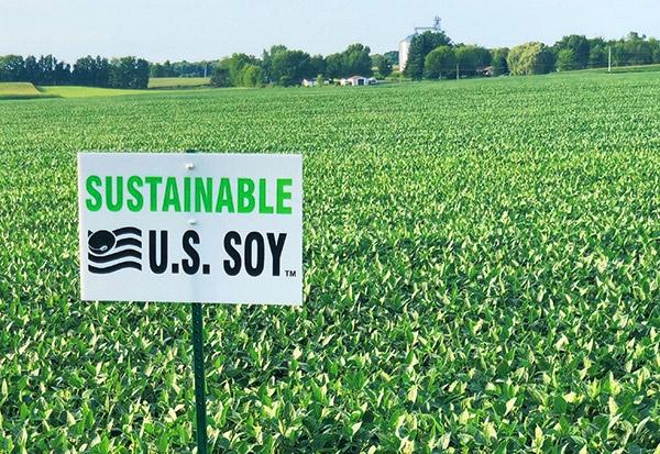 米国オハイオ州にあるSSAP認証大豆畑。2000エーカー(東京ドーム約173個分)を超える大豆畑も少なくない